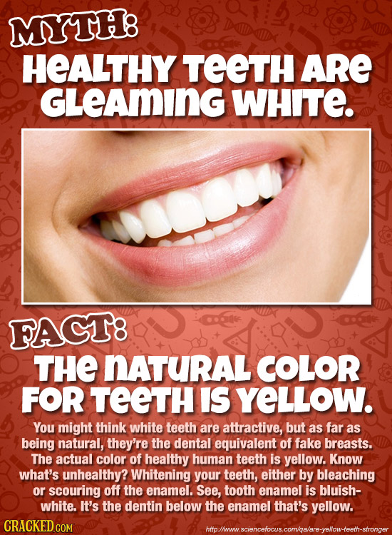 MYTH8 HEALTHY TEETH ARE GLEAMING WHITE. FAGT8 THE NATURAL COLOR FOR TEETH IS YELLOW. You might think white teeth are attractive, but as far as being n