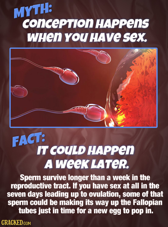 MYTH: conception HAPPenS WHEN you HAve sex. FACT: IT COULD HAPPen A week LATER. Sperm survive longer than a week in the reproductive tract. If you hav