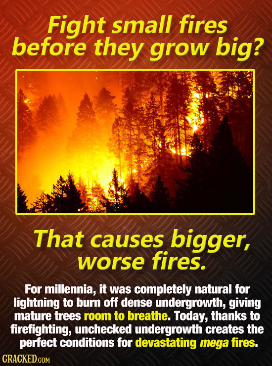 Fight small fires before they grow big? That causes bigger, worse fires. For millennia, it was completely natural for lightning to burn off dense unde