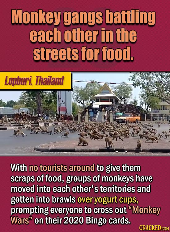 15 Of The Strangest Things 2020 Managed To Cook Up (Part 2) - Monkey gangs battling each other in the streets for food. With no tourists around to giv