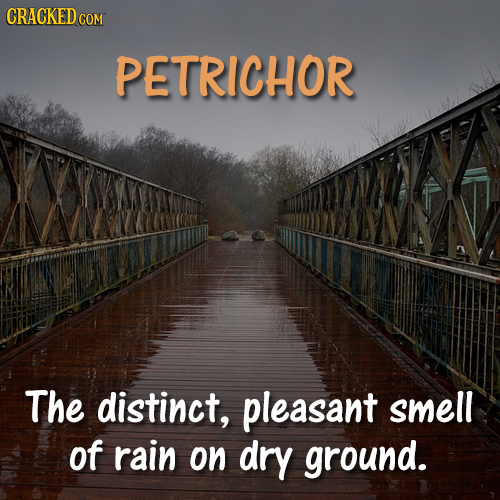 CRACKED COM PETRICHOR The distinct, pleasant smell of rain on dry ground.