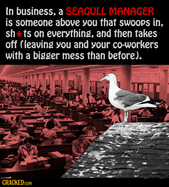 In business, a SEAGULL MANAGER is someone above you that SWOops in, sh ts on everything, and then takes off Cleaving you and your co-workers with a bi