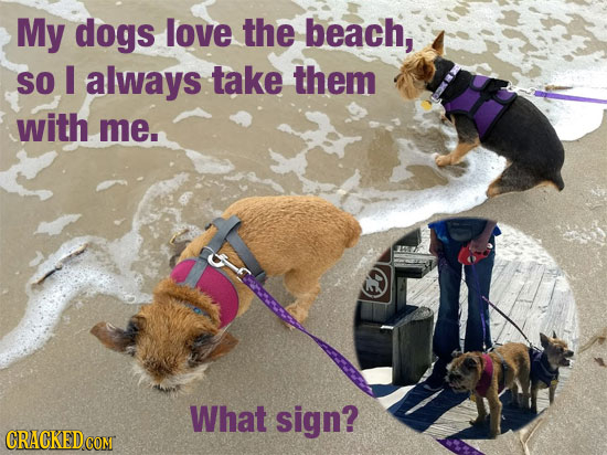 My dogs love the beach, SO I always take them with me. What sign?