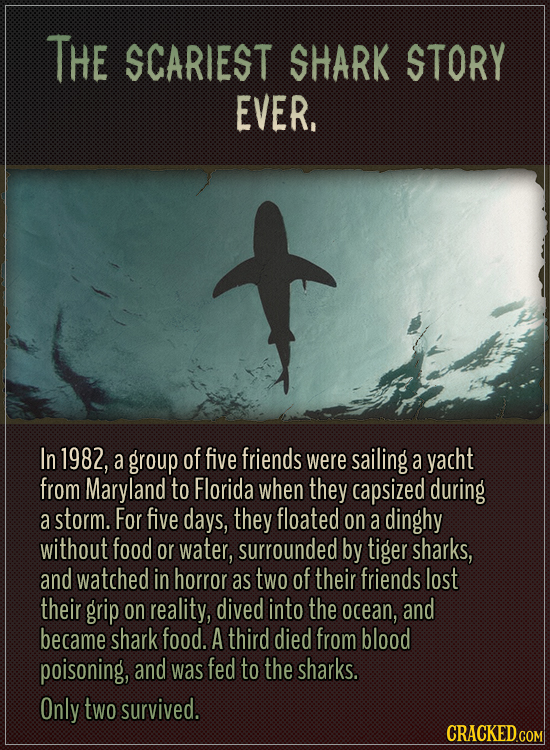 The scariest shark story ever.  In 1982, a group of five friends were sailing a yacht from Maryland to Florida when they capsized during a storm. For