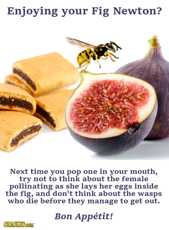 Enjoying your Fig Newton? Next time you pop one in your mouth, try not to think about the female pollinating as she lays her eggs inside the fig, and