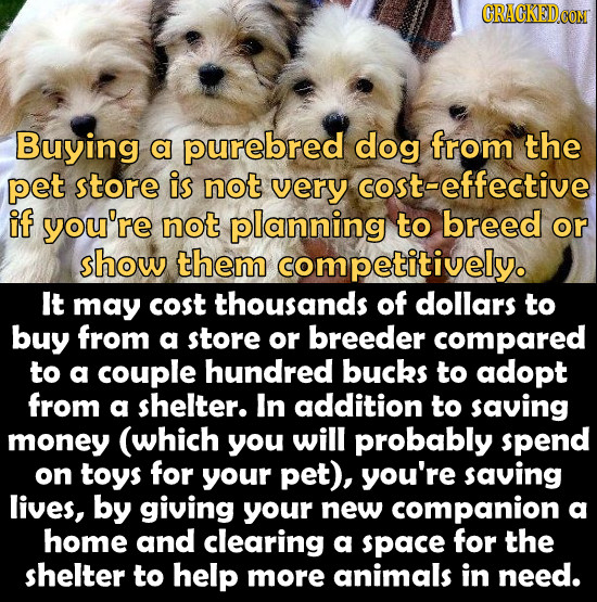 DGOR Buying a purebred dog from the pet store is not very cost-effective if you're not planning to breed or show them competitively. It may cost thous