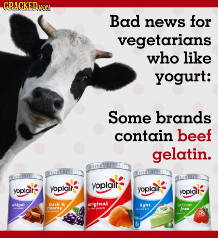 CRAGKED.COM Bad news for vegetarians who like yogurt: Some brands contain beef gelatin. yoplait yoplait yoplait yoplait yoplait whips! thick & origina