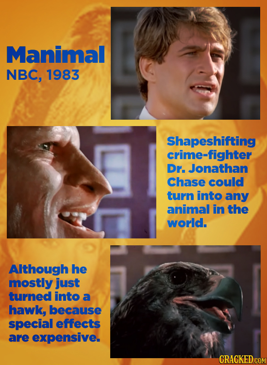Manimal NBC, 1983 Shapeshifting crime-fighter Dr. Jonathan Chase could turn into any animal in THE world. Although he mostly just turned into a hawk,