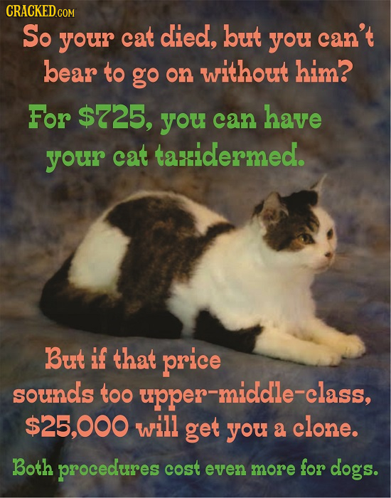 CRACKEDGOm So your cat died, but you can't bear to go without him? on For $725, you can have your cat taidermed. But if that price sounds too upper-mi