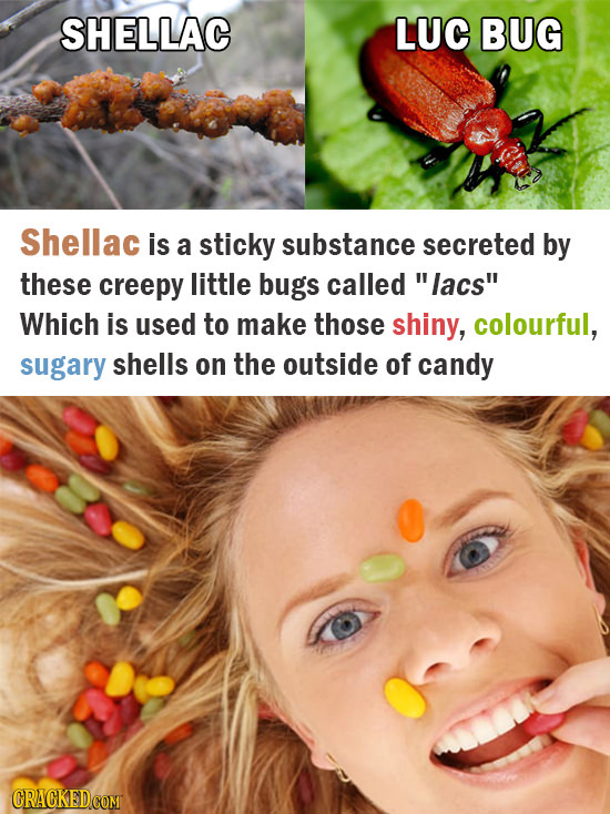 SHELLAC LUC BUG Shellac is a sticky substance secreted by these creepy little bugs called lacs Which is used to make those shiny, colourful, sugary