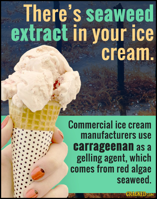 There's seaweed extract in your ice cream. Commercial ice cream manufacturers use carrageenan as a gelling agent, which comes from red algae seaweed.