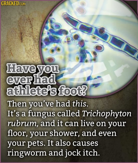 Tiny Horrors You (Thankfully) Can't See, That Are Everywhere