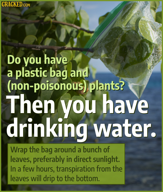 CRACKEDCO Do you have a plastic bag and (non-poisonous) plants? Then you have drinking water. Wrap the bag around a bunch of leaves, preferably in dir