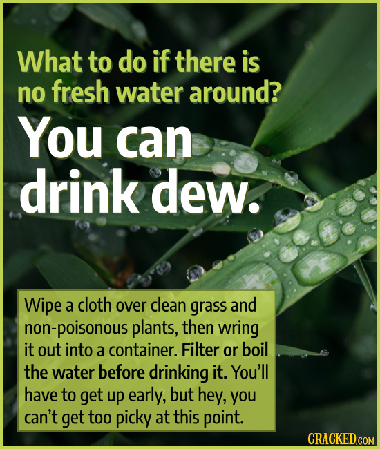 What to do if there is no fresh water around? You can drink dew. Wipe a cloth over clean grass and non-poisonous plants, then wring it out into a cont