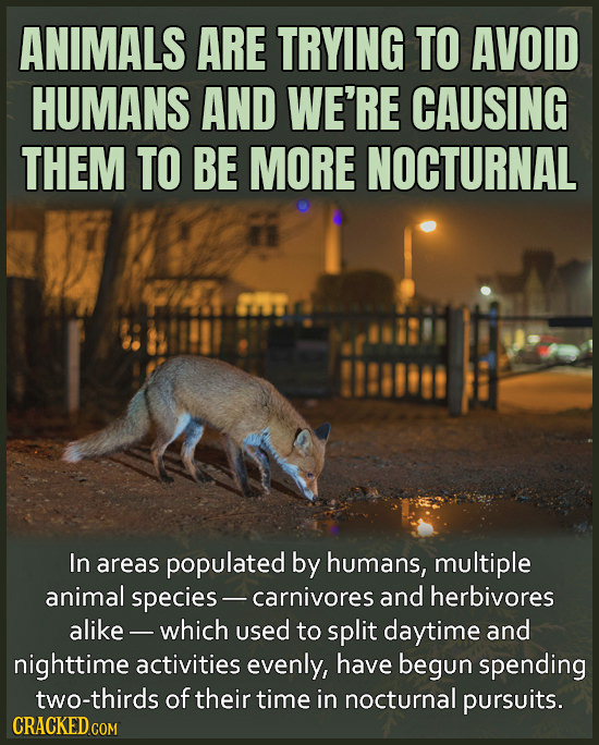 ANIMALS ARE TRYING TO AVOID HUMANS AND WE'RE CAUSING THEM TO BE MORE NOCTURNAL In areas populated by humans, multiple animal species- -carnivores and