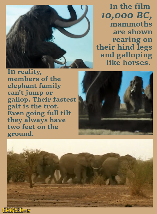 In the film 10, 000 BC, mammoths are shown rearing on their hind legs and galloping like horses. In reality, members of the elephant family can't jump