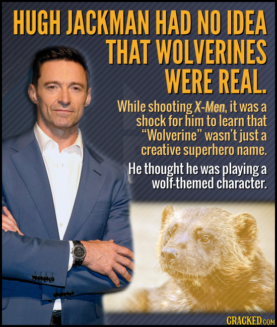 HUGH JACKMAN HAD NO IDEA THAT WOLVERINES WERE REAL. While shooting X-Men, it was a shock for him to learn that Wolverine wasn't just a creative supe