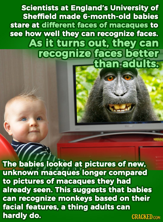 Scientists at England's University of Sheffield made 6-month-old babies stare at different faces of macaques to see how well they can recognize faces.