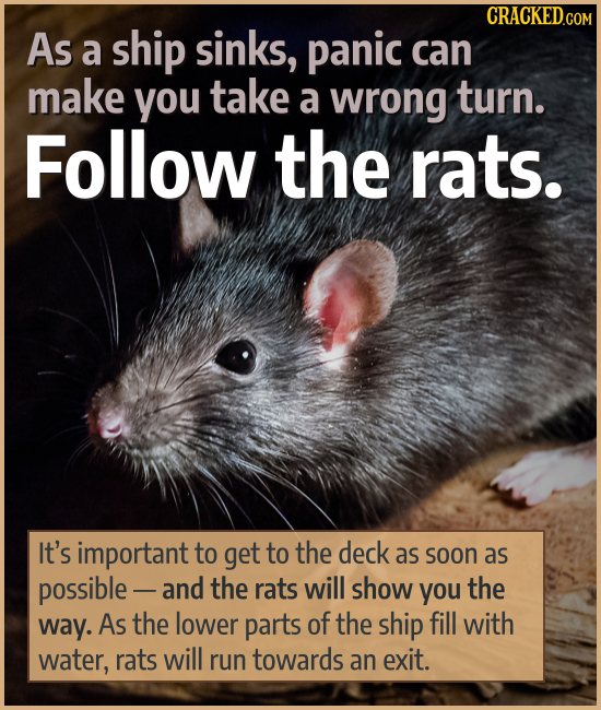 As a ship sinks, panic can make you take a wrong turn. Follow the rats. It's important to get to the deck as soon as possible - and the rats will show