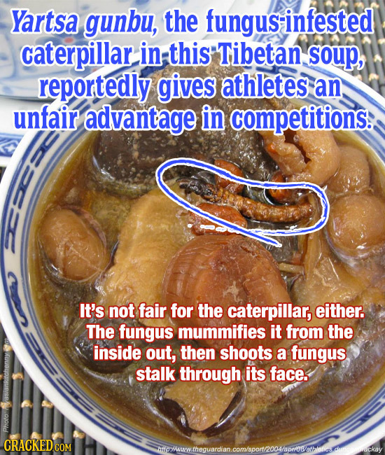 Yartsa gunbu, the fungus-infested caterpillar in this Tibetan soup, reportedly gives athletes an unfair advantage in competitions: It's not fair for t