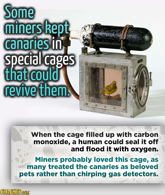 Some miners kept canaries in special cages that could revive them. When the cage filled up with carbon monoxide, a human could seal it off and flood i