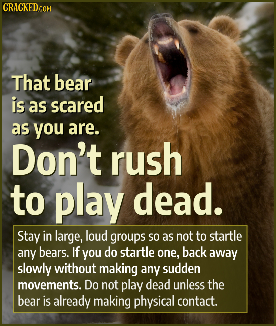 That bear is as scared as you are. Don't rush to play dead. Stay in large, loud groups SO as not to startle any bears. If you do startle one, back awa