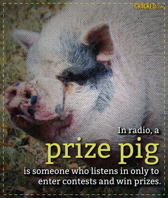 CRACKED COM prize In radio, a pig is someone who listens in only to enter contests and win prizes.