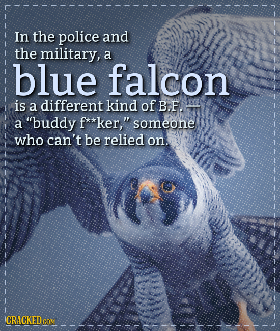 In the police and the military, a blue falcon is a different kind of B.F. a buddy F**ker, someone who can't be relied on. CRACKED COM
