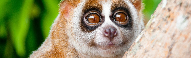 21 Horrific Facts About Adorable Animals