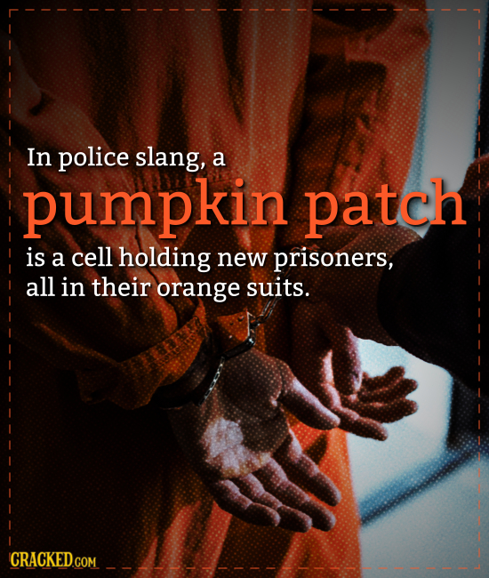In police slang, a pumpkin patch is a cell holding new prisoners, all in their orange suits. CRACKEDco COM
