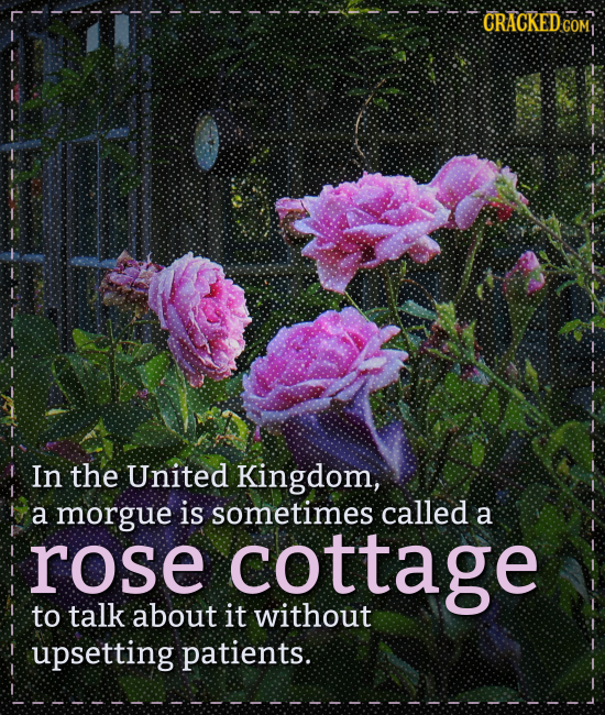 CRACKED COM1 In the United Kingdom, a morgue is sometimes called a rose cottage to talk about it without upsetting patients.