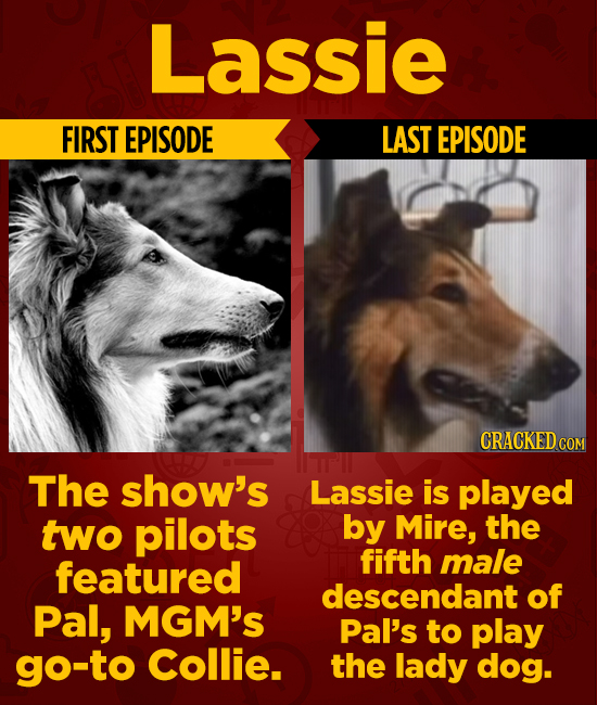 Lassie FIRST EPISODE LAST EPISODE CRACKED The show's Lassie is played two pilots by Mire, the featured fifth male descendant of Pal, MGM'S Pal's to pl