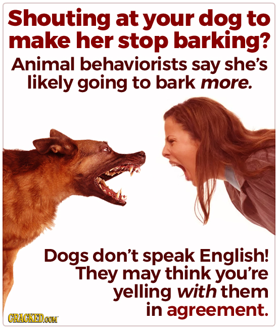 Shouting at your dog to make her stop barking? Animal behaviorists say she's likely going to bark more. Dogs don't speak English! They may think you'r