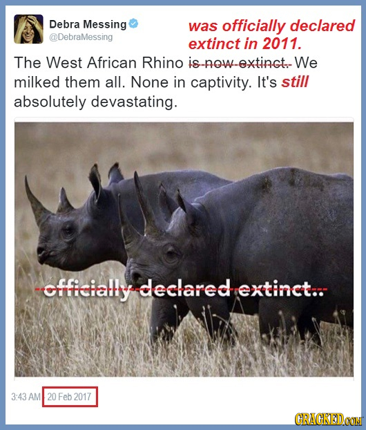 Debra Messing was officially declared @DebraMessing extinct in 2011. The West African Rhino S-new-extingt. We milked them all. None in captivity. It's