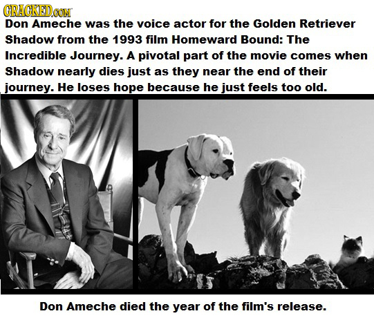 CRAGKED Don Ameche was the voice actor for the Golden Retriever Shadow from the 1993 film Homeward Bound: The Incredible Journey. A pivotal part of th