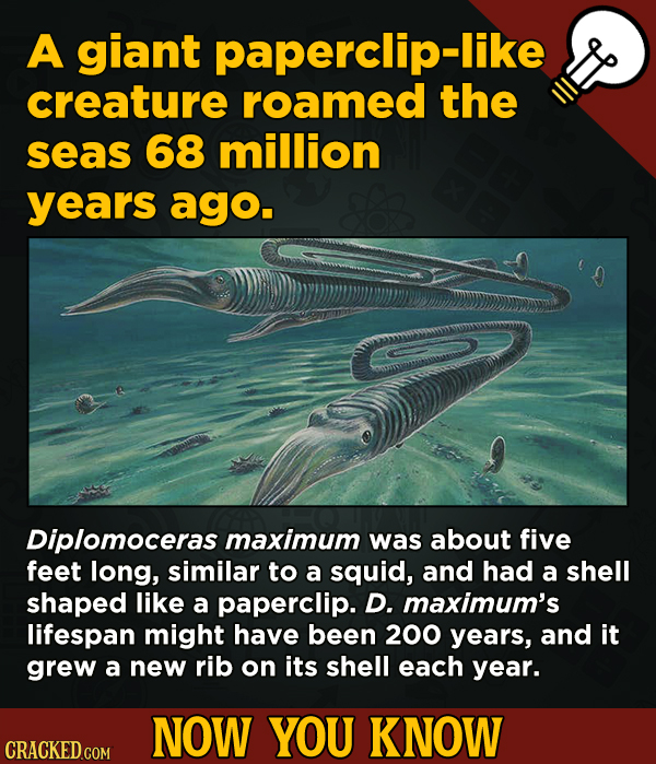 13 Little-Known Facts About Movies, History, And Science - A giant paperclip-like creature roamed the seas 68 million years ago.