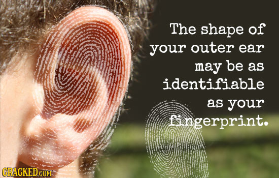 The shape of your outer ear may be as identifiable as your fingerprint.