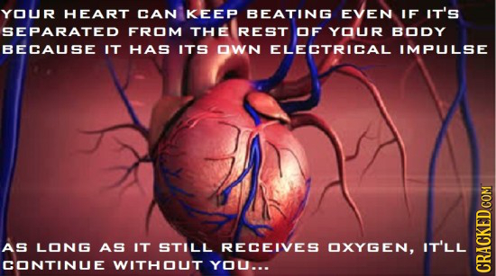 YOUR HEART CAN KEEP BEATING EVEN IF IT'S SEPARATED FROM THE REST OF YOUR BODY BECAUSE IT HAS ITS OWN ELECTRICAL IMPULSE AS LONG AS IT STILL RECEIVES O