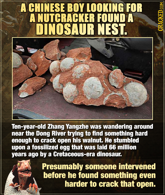 A CHINESE BOY LOOKING FOR A NUTCRACKER FOUND A DINOSAUR NEST. CRAGN Ten-year-old Zhang Yangzhe was wandering around near the Dong River trying to find