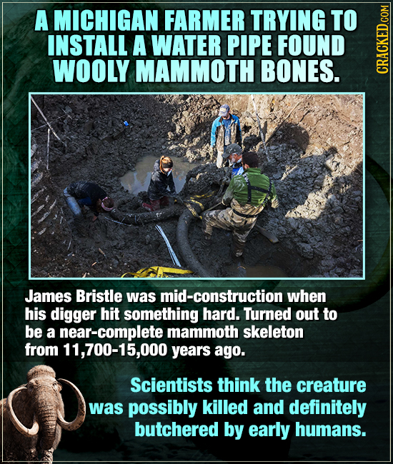 A MICHIGAN FARMER TRYING TO INSTALL A WATER PIPE FOUND WOOLY MAMMOTH BONES. CRAGA James Bristle was mid-construction when his digger hit something har