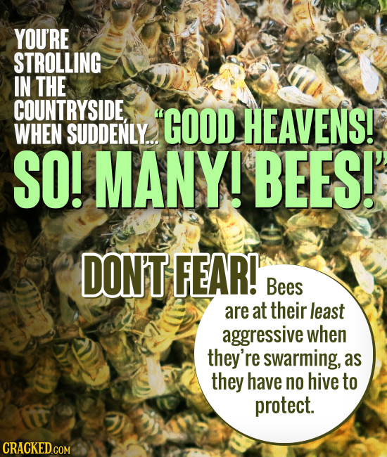 YOU'RE STROLLING IN THE COUNTRYSIDE, GOOD HEAVENS! WHEN SUDDENLY... SO! MANY! BEES!' DON'T FEAR! Bees are at their least aggressive when they're swar