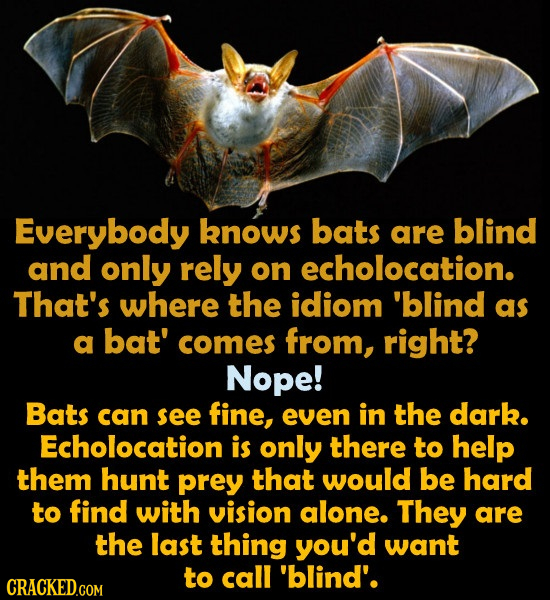 Everybody knows bats are blind and only rely on echolocation. That's where the idiom 'blind as a bat' comes from, right? Nope! Bats can see fine, even