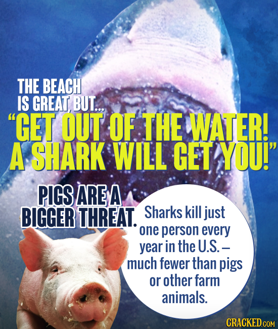 THE BEACH IS GREAT BUT... GET OUT OF THE WATER! A SHARK WILL GET YOU! PIGS ARE A BIGGER THREAT. Sharks kill just one person every year in the U.S.-