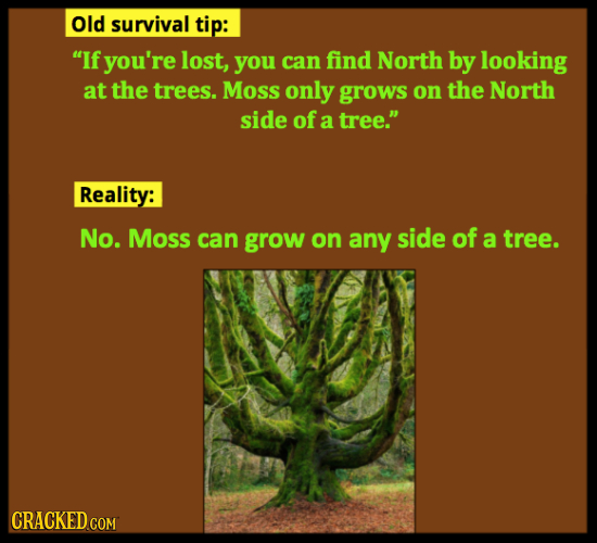 Old survival tip: If you're lost, you can find North by looking at the trees. Moss only grows on the North side of a tree. Reality: No. Moss can gro