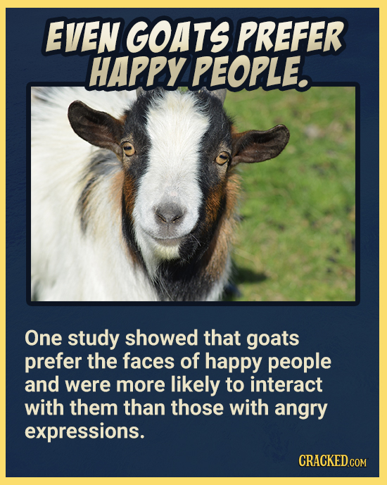 EVEN GOATS PREFER HAPPY PEOPLE. One study showed that goats prefer the faces of happy people and were more likely to interact with them than those wit