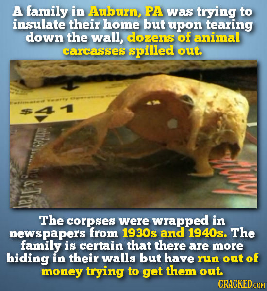 A family in Auburn, PA was trying to insulate their home but upon tearing down the wall, dozens of animal carcasses spilled out. hodes The corpses wer