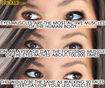 EYES MUSCLES ARE THE MOST ACTIVE MUSCLES OF THE HUMAN BODY AN DAY THE FOCUSING MUSCLE OFTHEEYES MOVES ABOUT 100,000 TIMES THIS WOULD BE THE SAME AS WA
