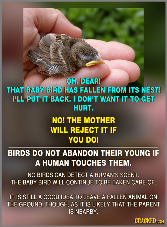OH, DEAR! THAT BABY BIRD HAS FALLEN FROM ITS NEST! I'LL PUT IT BACK. I DON'T WANT IT TO GET HURT. NO! THE MOTHER WILL REJECT IT IF YOU DO! BIRDS DO NO