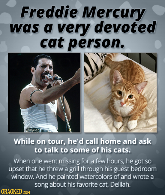 Freddie Mercury was a very devoted cat person. While on tour, he'd call home and ask to talk to some of his cats. When one went missing for a few hour
