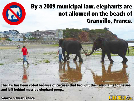 By a 2009 municipal law, elephants are not allowed on The beach of Granville, France. The law has been voted because of circuses that brought their el